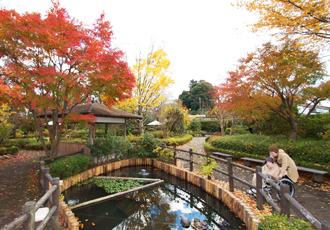 秋の遊歩公園